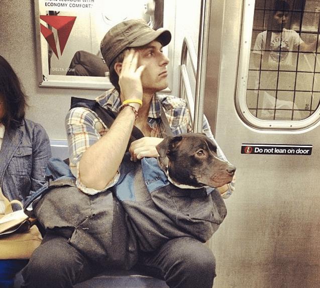 Собака в сумке в метро