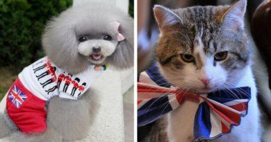 Собаки и кошки в Великобритании