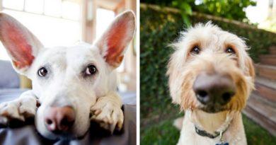 Собаки фотографа Грейс Чон