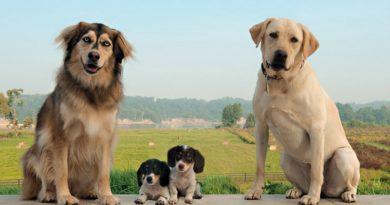 Факты про собак