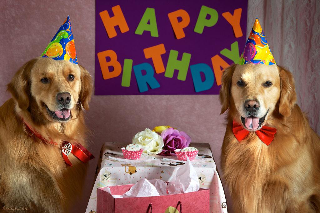 День рождения собаке открытка