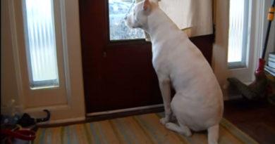 Собака встречает хозяина из армии