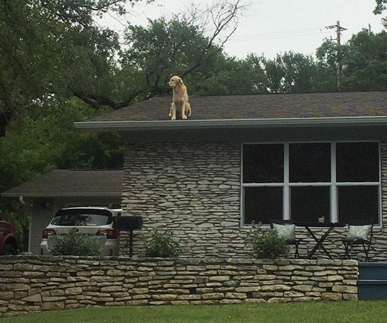 Собака сидит на крыше