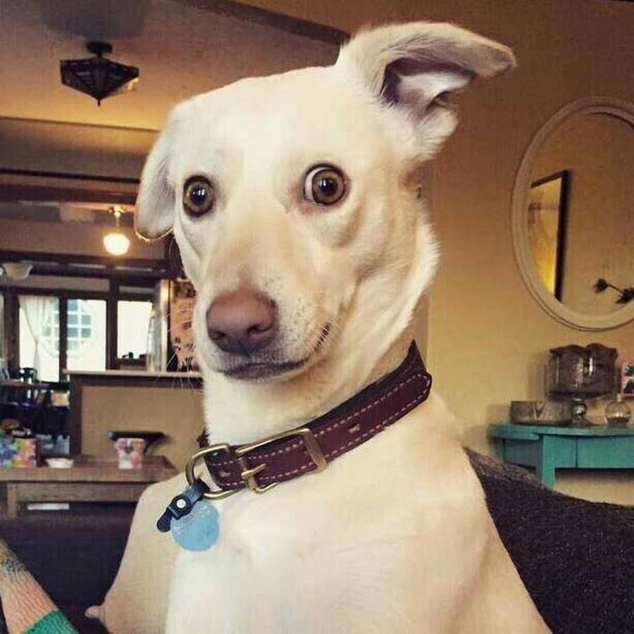 Собака удивляется