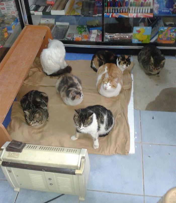 В Стамбуле спасают кошек от холода
