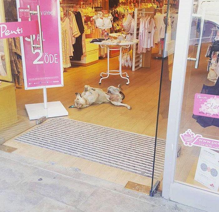 В Стамбуле спасают собак от холода