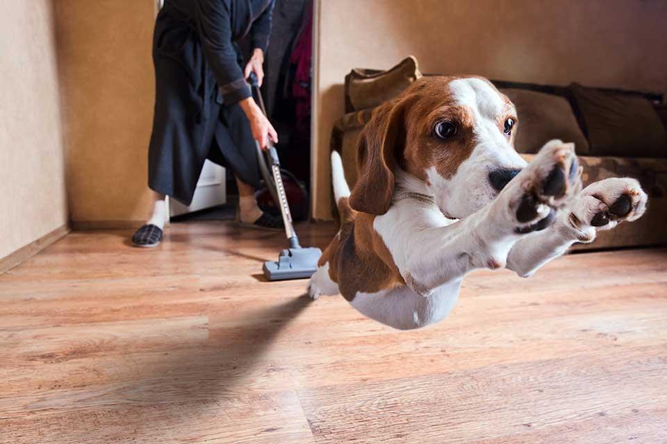 Собака боиться пылесоса