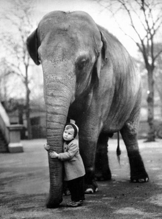 Ретро фотографии животных