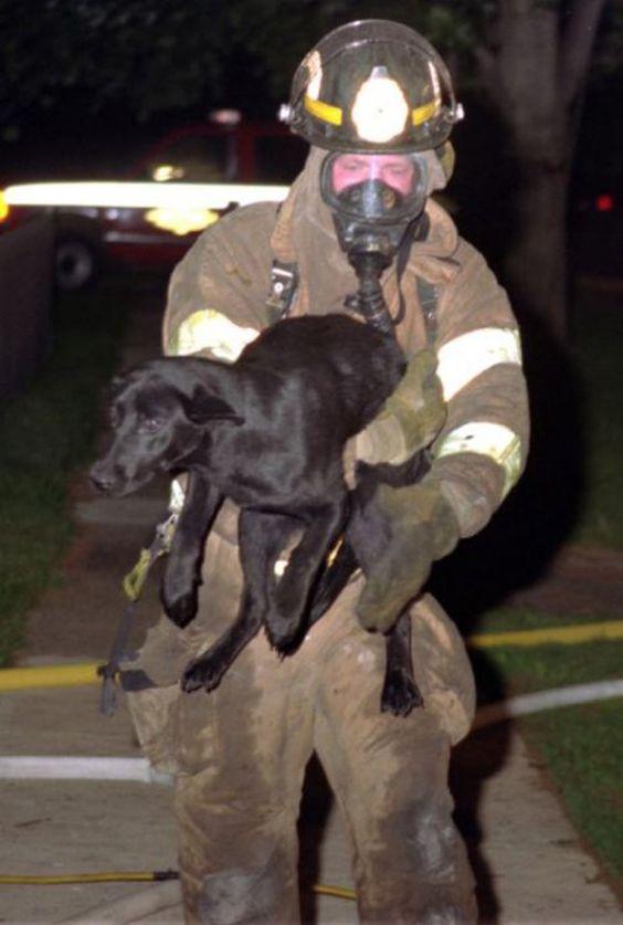 Пожарные и животные