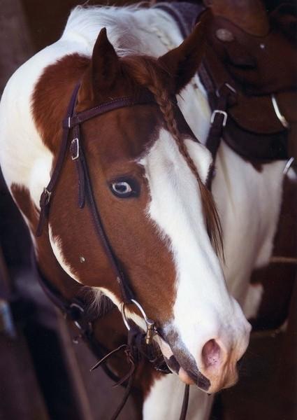 Лошадь с гетерохромией