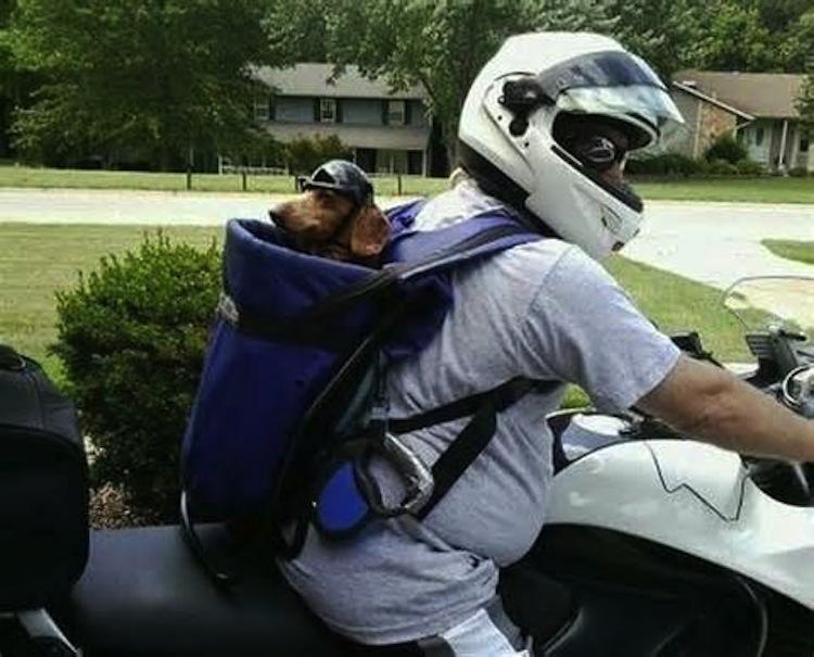 Собака в рюкзаке