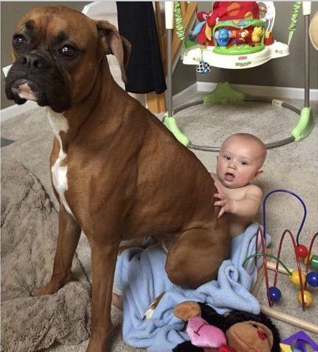 Курьезы с собаками