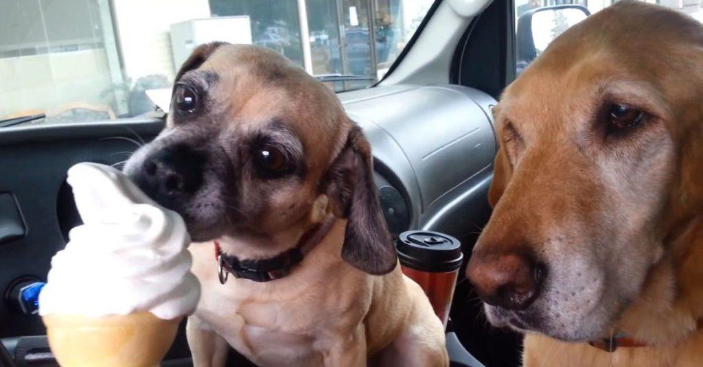 Собака ест мороженое