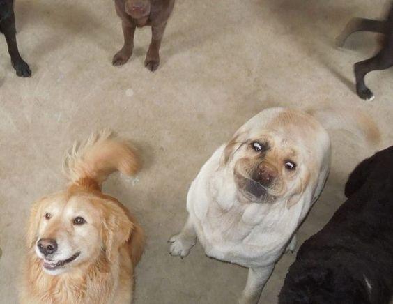 Собачье селфи