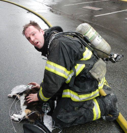 Пожарный спасает кошку