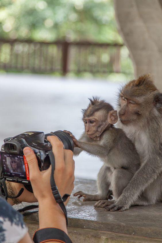 Фотограф диких животных