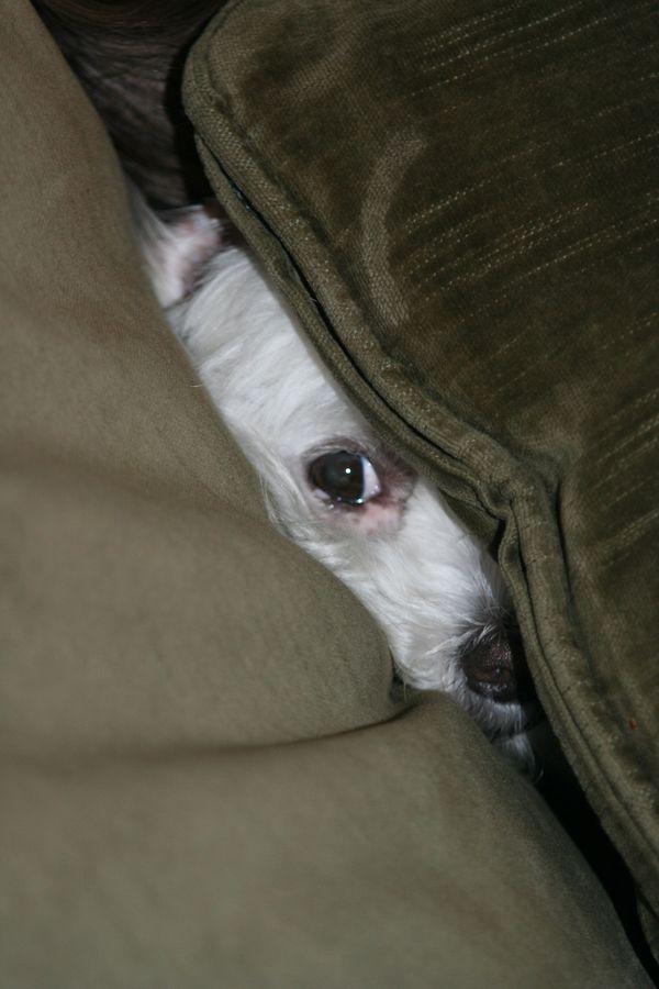 Собаки прячутся