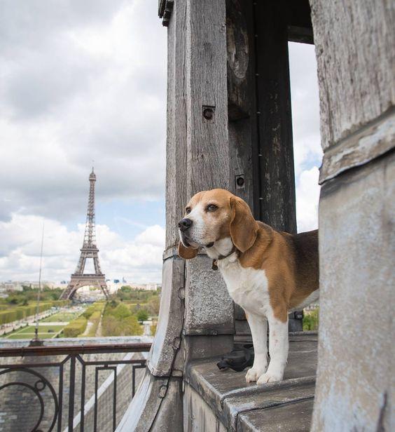 Собаки во Франции