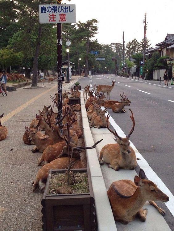 Собаки в Японии
