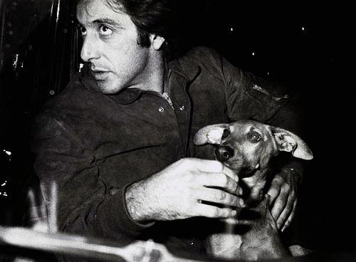 Аль Пачино и собака