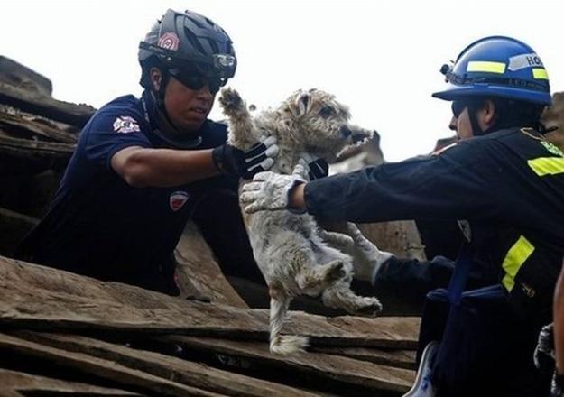 Пожарный спасает собаку