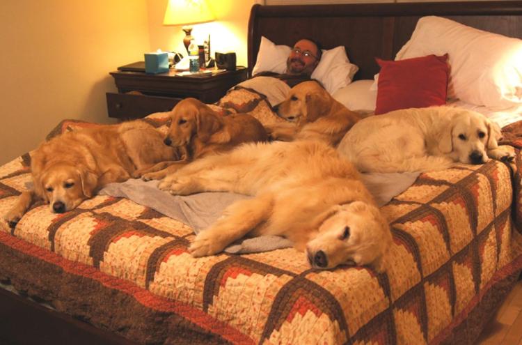 Собаки в кровати