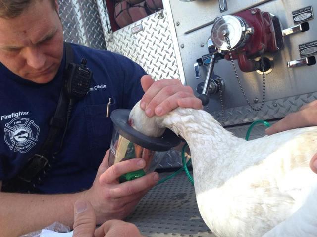 Пожарный спасает птиц