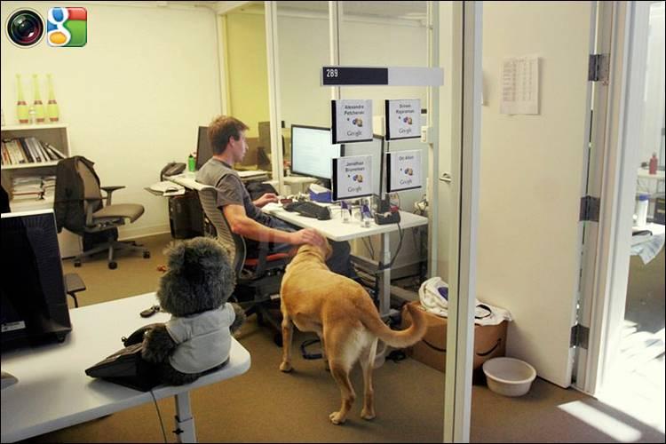 Собаки в офисе
