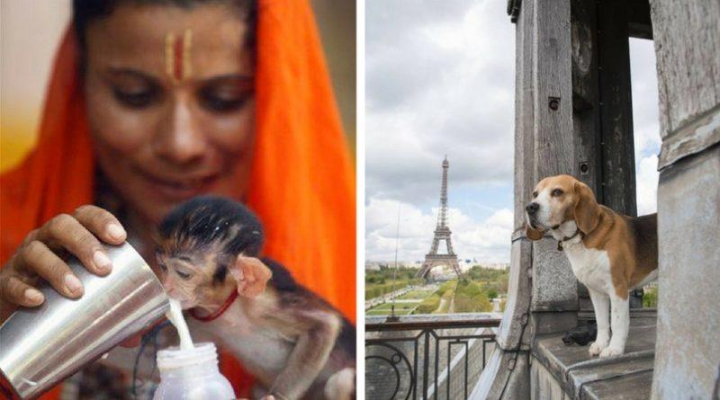 Защита животных в разных странах