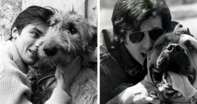 Знаменитости и собаки