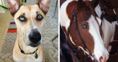 Животные с разными глазами