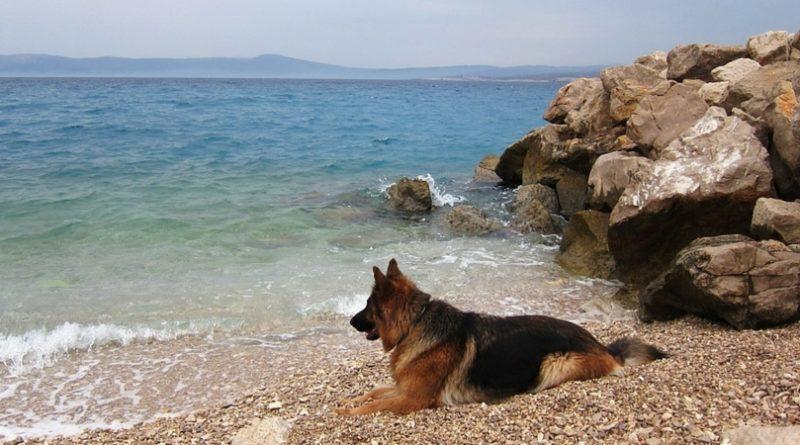 Собака на пляже в Хорватии