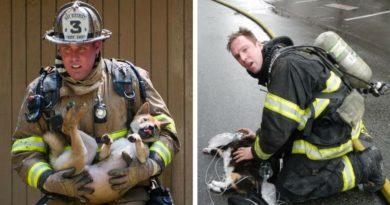 Спасение животных из пожара