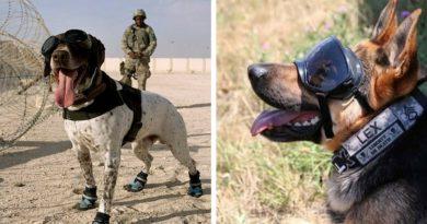 Собаки в армии