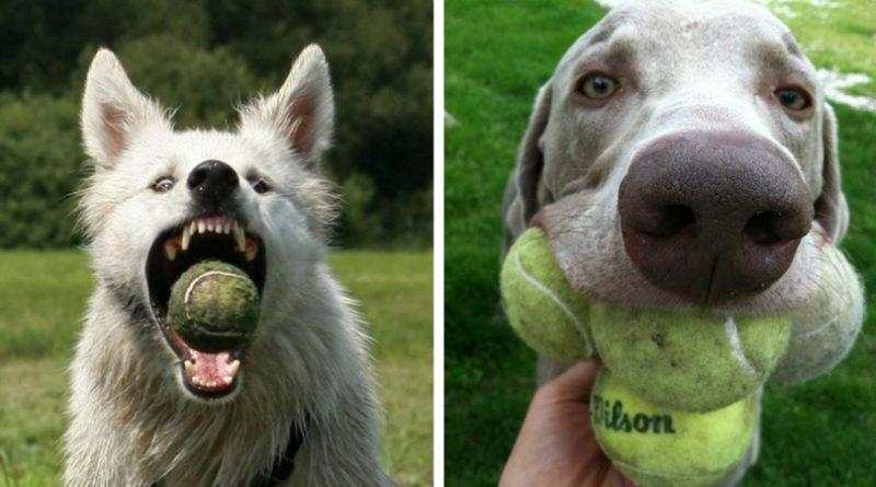 Собака с мячом