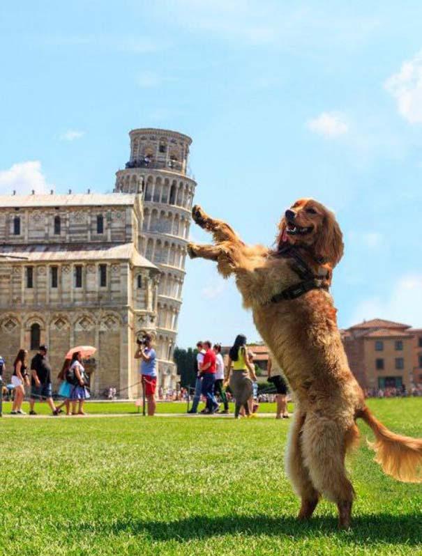 Собаки в Италии