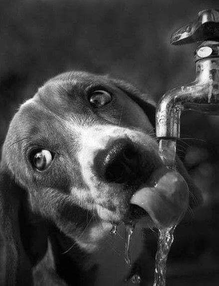 О собаках и людях