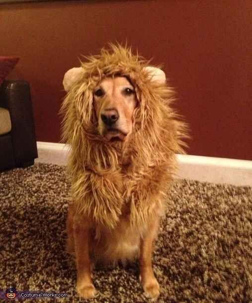 Собаки в пугающих костюмах
