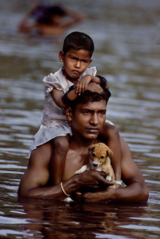 Собаки в Индии