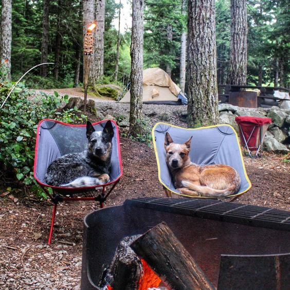 Собаки без комплексов