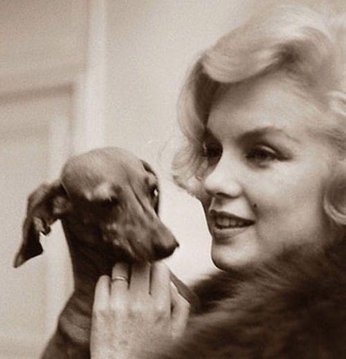 Мэрилин Монро и собаки
