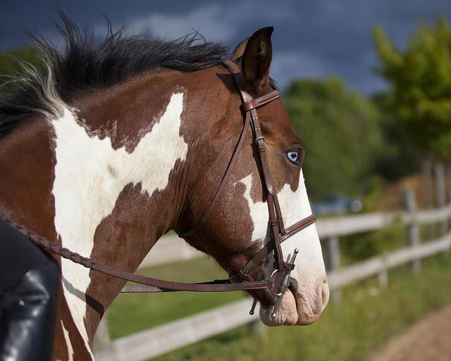 Лошадь с разными глазами