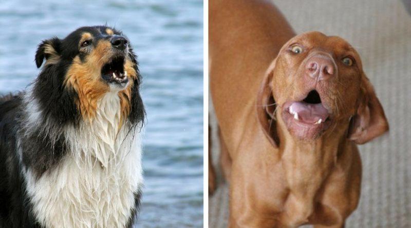 Чрезмерный лай у собак