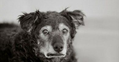 Собаки в проекте Нэнси Левин