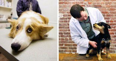 Изоспороз собак