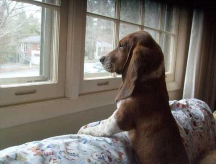 Собака ждет хозяина
