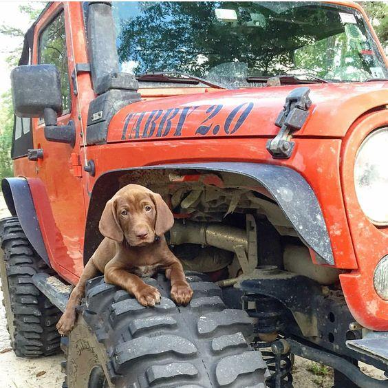 Собаки и машины