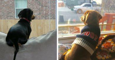 Собаки ждут хозяина
