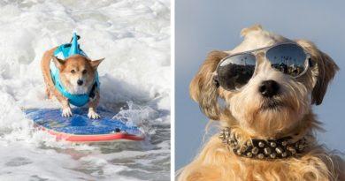 Собаки серферы