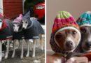 Как согреть любимую собаку: 32 фото идеи